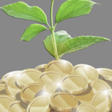 Seeds To Empower Logo
