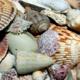 Sea Shell Partner - Limited Availability