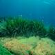 Sea Grass Partner