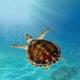 Sea Turtle Partner