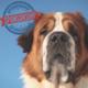 Big Dog Sponsorship