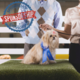 Top Dog Presenting Sponsorship